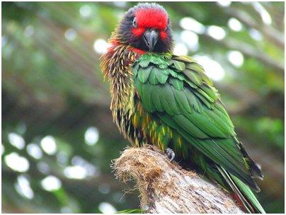 Fuengirola Zoo papukaija puisto kuva