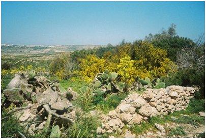 Maltan kasvillisuutta